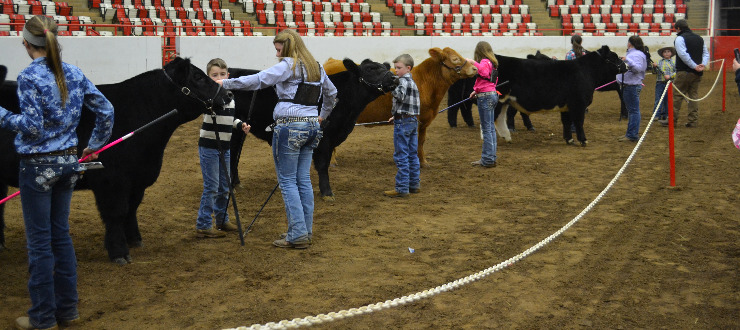 2015 Winter Classic Junior Showmanship